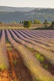 Baum- und Lavendelfeld lizenzfreie stockfotos