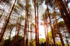 Baum und Leuchte Lizenzfreie Stockbilder