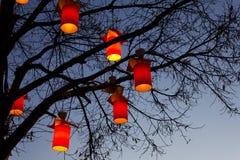 Baum und Lichter nachts Stockfotos