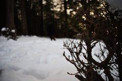 Baum und Mann im Schnee Stockbild