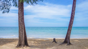 Baum und Meer lizenzfreie stockfotos