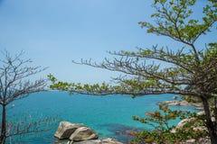 Baum und Meer Stockfotos