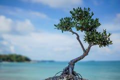 Baum und Meer Stockbild