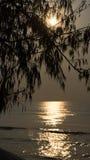 Baum und Meer auf Sonnenaufgang Lizenzfreie Stockfotos