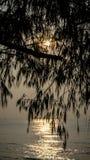 Baum und Meer auf Sonnenaufgang Lizenzfreies Stockfoto