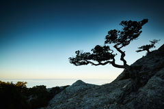 Baum und Meer bei Sonnenuntergang Blauer Himmel und blanke Hügel Stockbilder