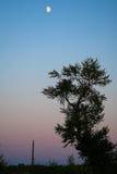 Baum und Mond Lizenzfreies Stockfoto