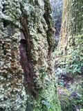 Baum und Moos Stockfotos