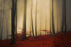 Baum und Nebel stockfotografie