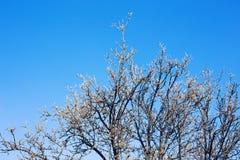 Baum und Niederlassungen auf blauem Himmel und Wolken Lizenzfreie Stockfotos