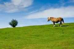 Baum und Pferd stockbilder