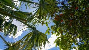 Baum und plam stockbilder