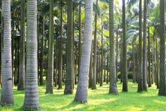 Baum und Rasen Stockfotos