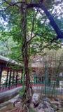 Baum und Rebe Lizenzfreie Stockfotos
