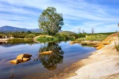 Baum und Reflexion im Fluss Lizenzfreie Stockfotos