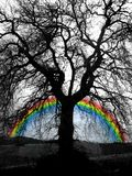 Baum und Regenbogen Lizenzfreie Stockfotos