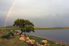 Baum und Regenbogen stockfotos