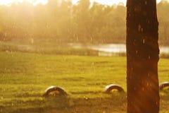 Baum und Reifen im Regen lizenzfreie stockfotos