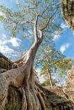 Baum und Ruine Stockfotografie