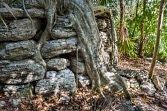 Baum und Ruinen Stockfoto