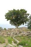 Baum und Ruinen von Chersonese Taurian stockfotos