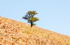 Baum und Schafe Stockbild