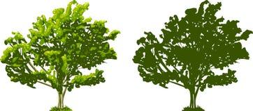 Baum und Schattenbild vektor abbildung