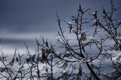 Baum und Schnee in der Winternacht Stockfotos