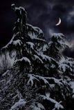Baum und Schnee in der Winternacht Lizenzfreie Stockfotos