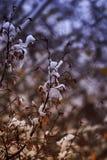 Baum und Schnee in der Winternacht Lizenzfreies Stockbild