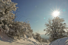 Baum und schneebedeckter Pfad Stockfoto