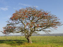 Baum und Schwingen mit Zaun Stockbild