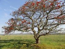 Baum und Schwingen mit Zaun Lizenzfreies Stockfoto