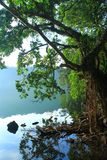 Baum und See lizenzfreie stockbilder