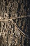 Baum und Seil Lizenzfreies Stockbild