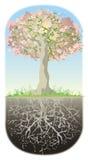 Baum und seine Wurzeln Stockbild