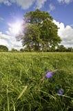 Baum und Sommersonnenschein stockfotografie