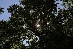 Baum und Sonne Lizenzfreie Stockfotografie