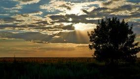 Baum und Sonnenblume Lizenzfreies Stockfoto