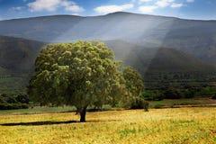 Baum und Sonnenschein Stockfotografie