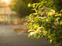 Baum und Sonnenschein Stockfoto