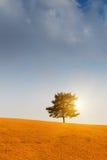 Baum und Sonnenuntergang stockfotos