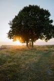 Baum und Sonnenuntergang auf dem Hügel Stockbilder