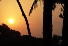 Baum- und Sonnenuntergangfoto Stockfoto