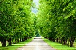 Baum und Straße Stockfotos