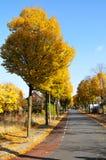 Baum und Straße Lizenzfreie Stockbilder