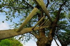 Baum und Strichleiter Lizenzfreie Stockbilder