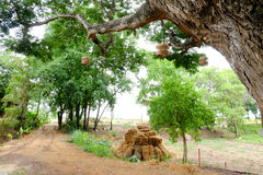 Baum und Stroh Stockfoto