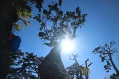 Baum und Tageslicht lizenzfreie stockfotos