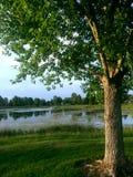 Baum und Teich Lizenzfreies Stockbild